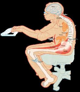 dos-voute-travail-yoga