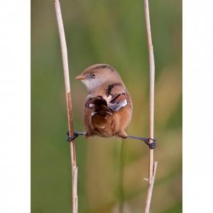 oiseau-grand-écart-yoga