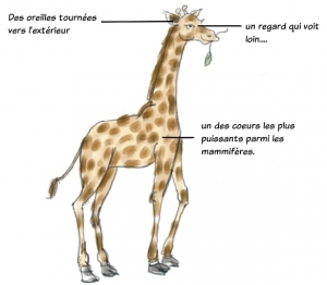 girafe-communication-non-violente