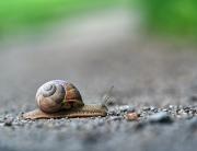 Mouvement Slow et pratique du Yoga