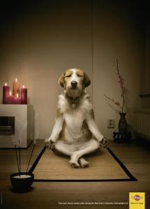 chien méditatif formation prof de Yoga