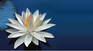 lotus-isis