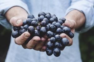 raisins-automne