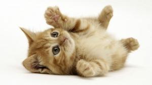 cat-estiramiento de yoga