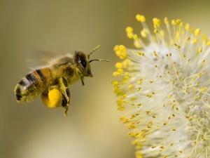 pollen-allergies