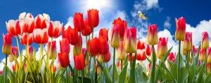 printemps fleurs nature